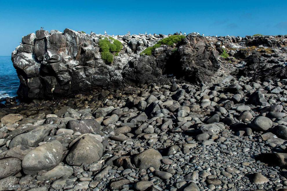 Галапагосы. Остров Эспаньола