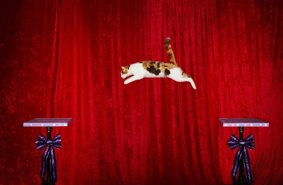 Самый длинный прыжок домашнего кота зафиксирован в Техасе