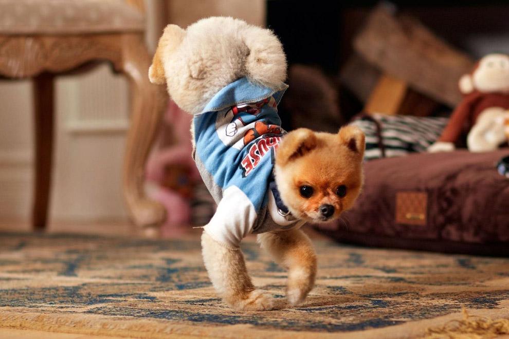 Самая скоростная собака на двух лапах