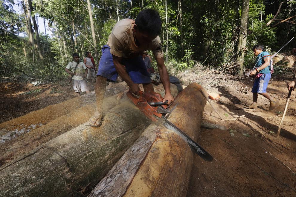 15s Как воины джунглей Амазонки борются с черными лесорубами