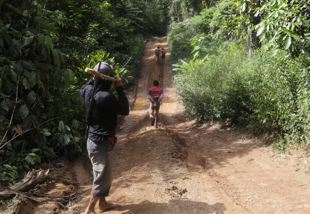 Как воины джунглей Амазонки борются с черными лесорубами