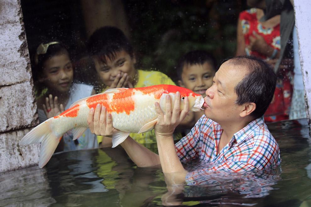 Владелец зоопарка в Маниле и гигантский японский карп кои