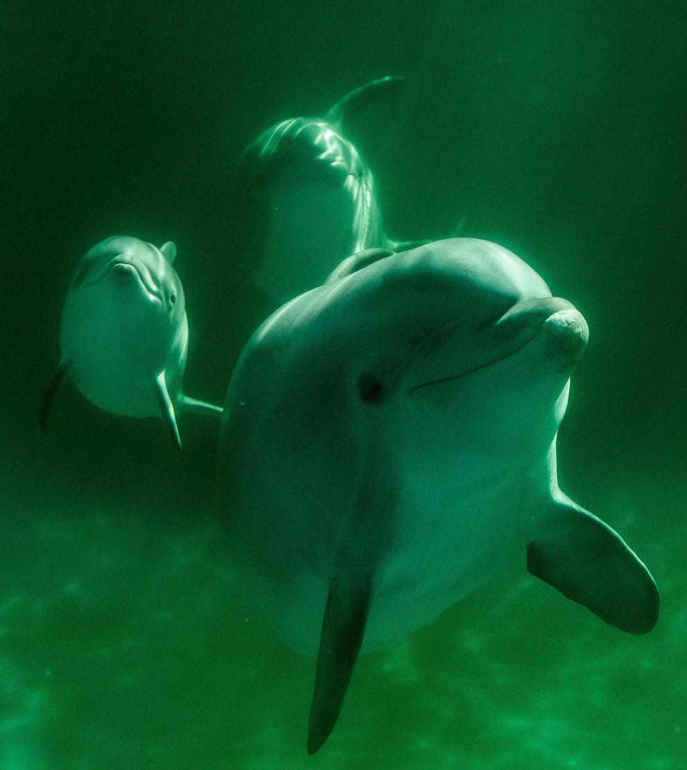 7-дневный дельфинчик с мамой в аквапарке Мадрида