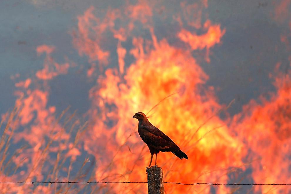 Птица на фоне лесного пожара