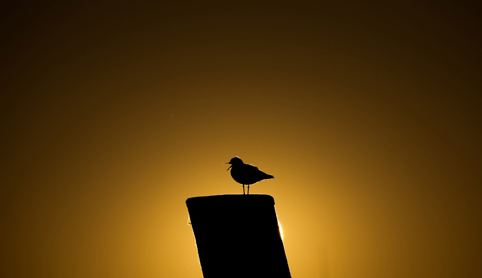 Чайка в порту Гамбурга