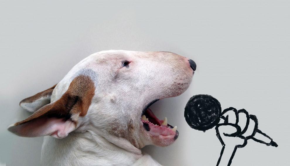 Иллюстрированный пес
