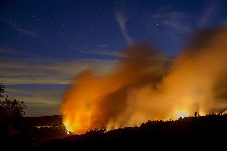 Королевский огонь Калифорнии