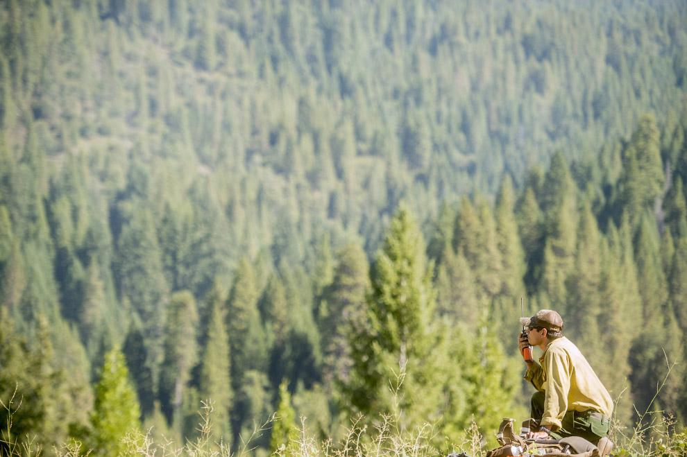 Причины возникновения лесных пожаров обычно делят на естественные (природные) и антропогенные