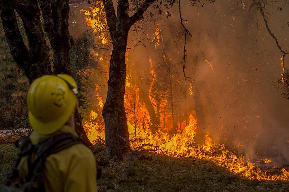 Верховой лесной пожар