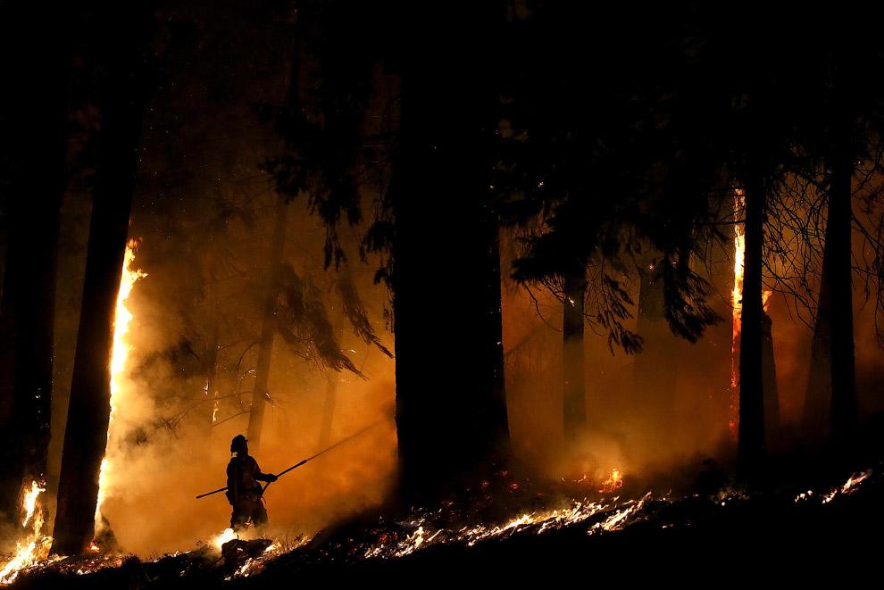 Один на один с Королевским огнем в Калифорнии