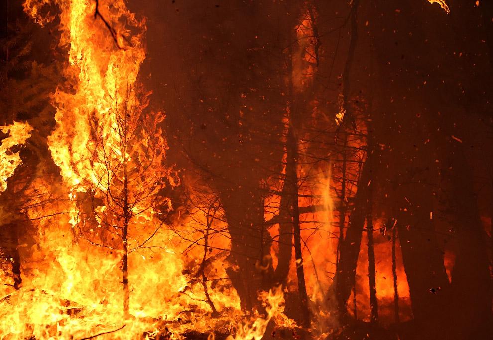 Королевский огонь Калифорнии поедает деревья