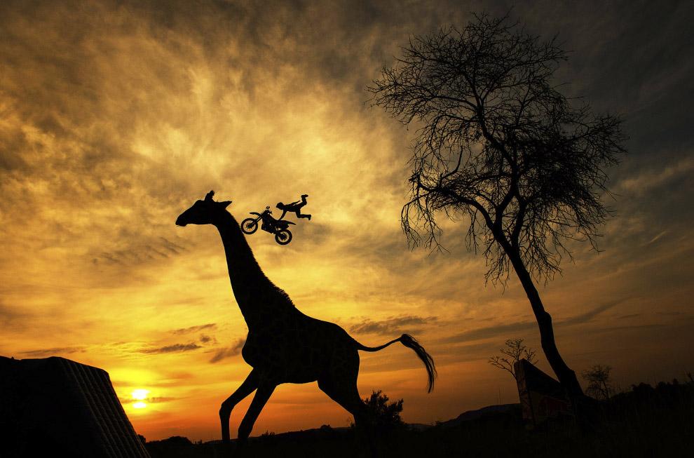 Летящий мотоциклист и жираф