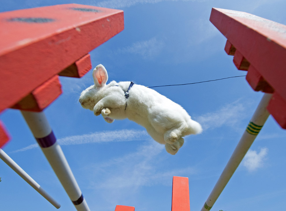 Кроличьи бега с препятствиями в Германии