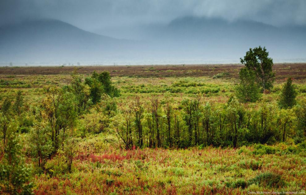 Цветущая тундра по пути в поселок Мильково