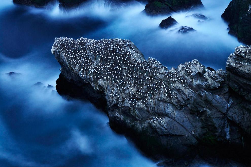 """Победитель в категории """"Среда обитания"""": жизнь в море"""