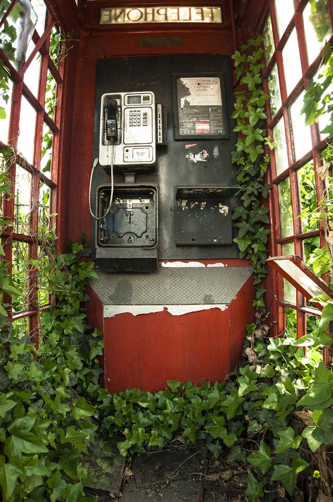 Категория «Ботаника»: телефонная будка