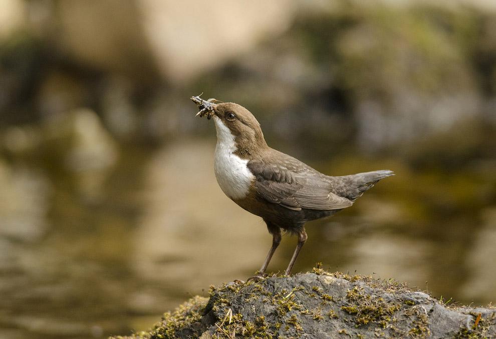 Птица с личинками