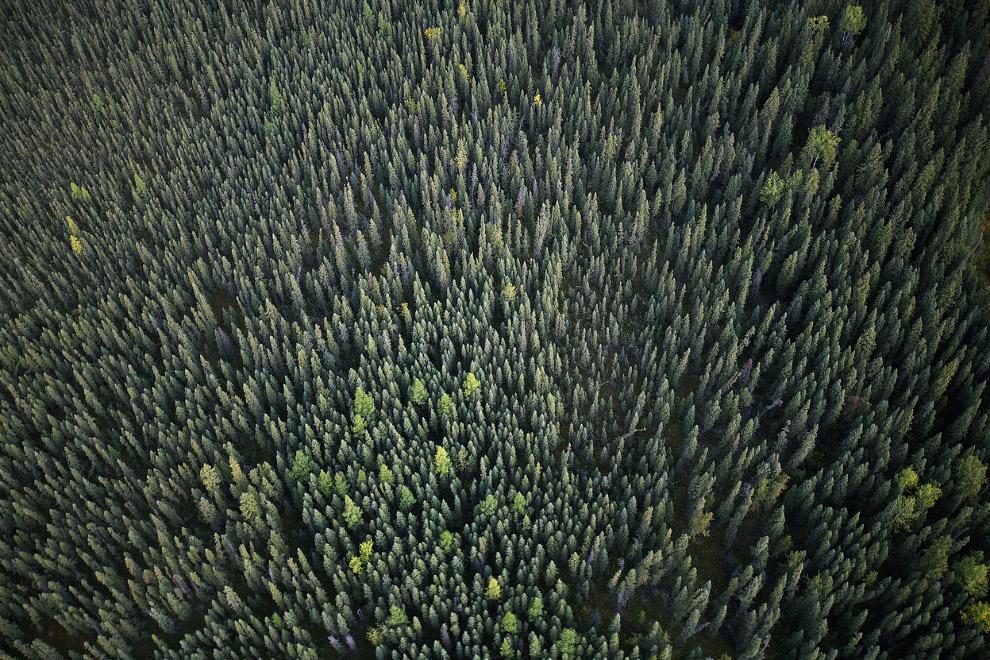 Местный пейзажи с вертолета. Сосны