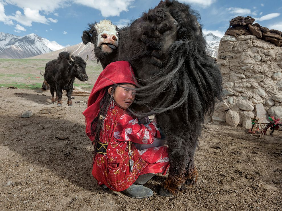 В северном Афганистане на большой высоте не растут никакие культуры. Выживание здесь целиком зависит от домашних животных