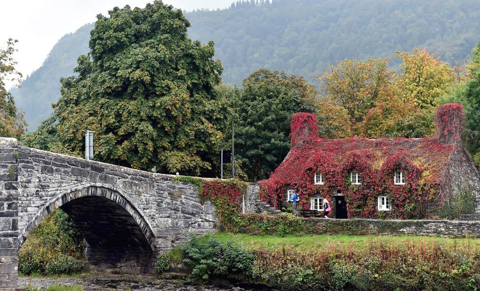 Дом в осенних листьях