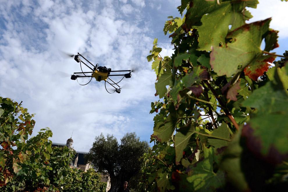 В городе Бордо на юго-западе Франции используют коптеры с инфракрасной камерой для определения созревшего винограда