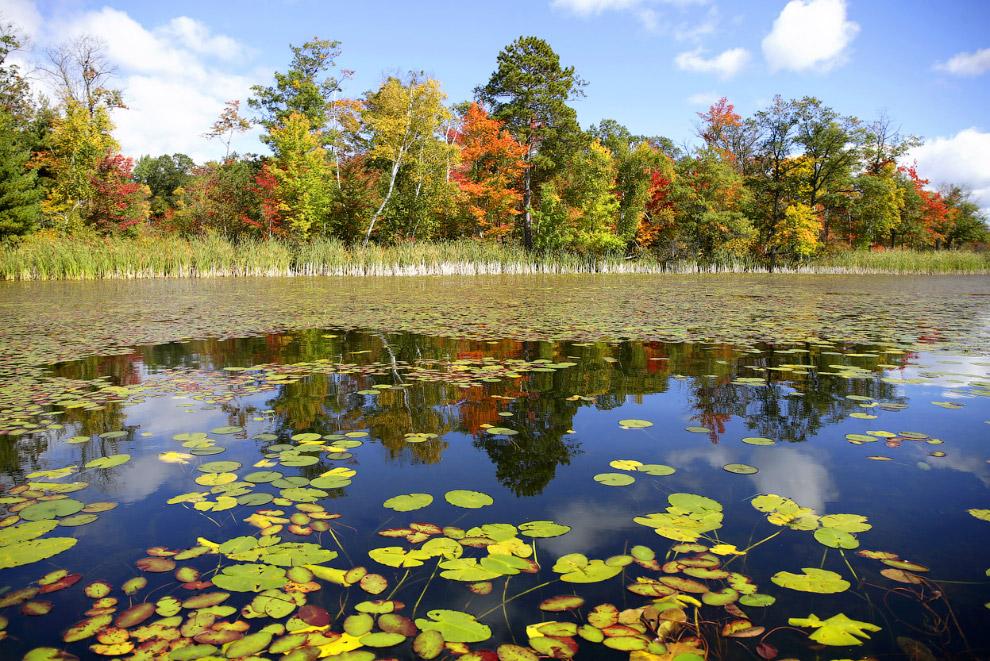 Осенний пруд в штате Миннесота