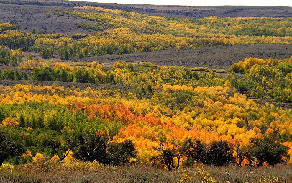 Золотая осень 2014 в штате Орегон