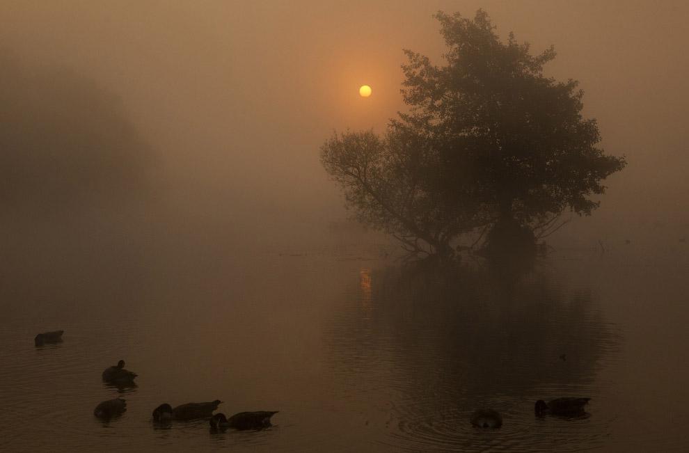 Утки и гуси в осеннем Ричмонд-парке