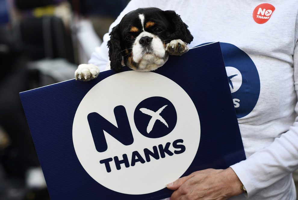 Собака в сумке против независимости