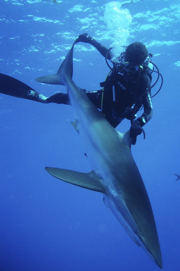 http://loveopium.ru/content/2014/09/shark/15.jpg