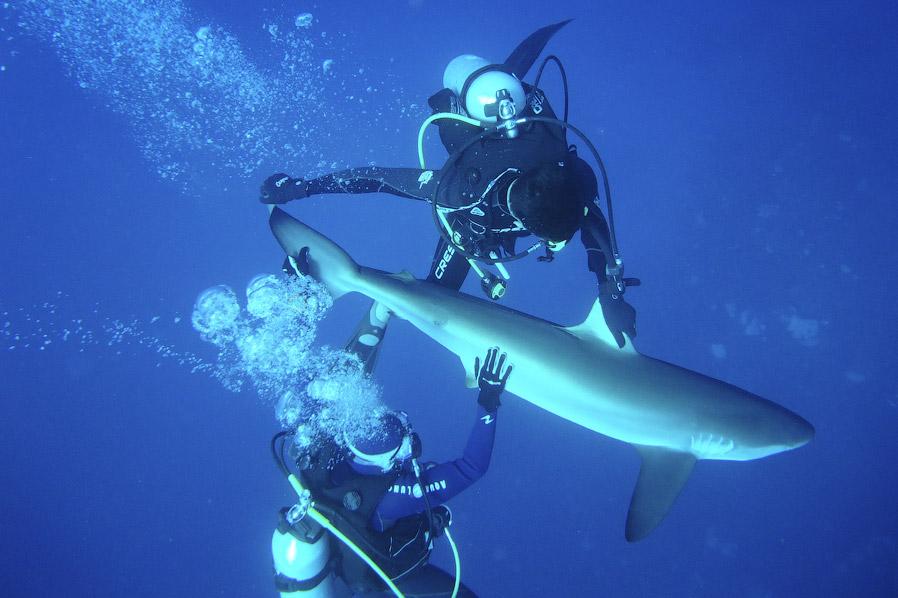 http://loveopium.ru/content/2014/09/shark/16.jpg
