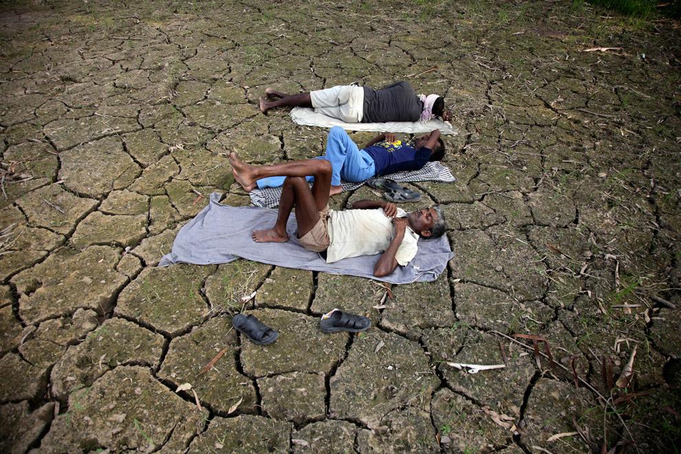 Индийские рабочие в пострадавшем от засухи рисовом поле