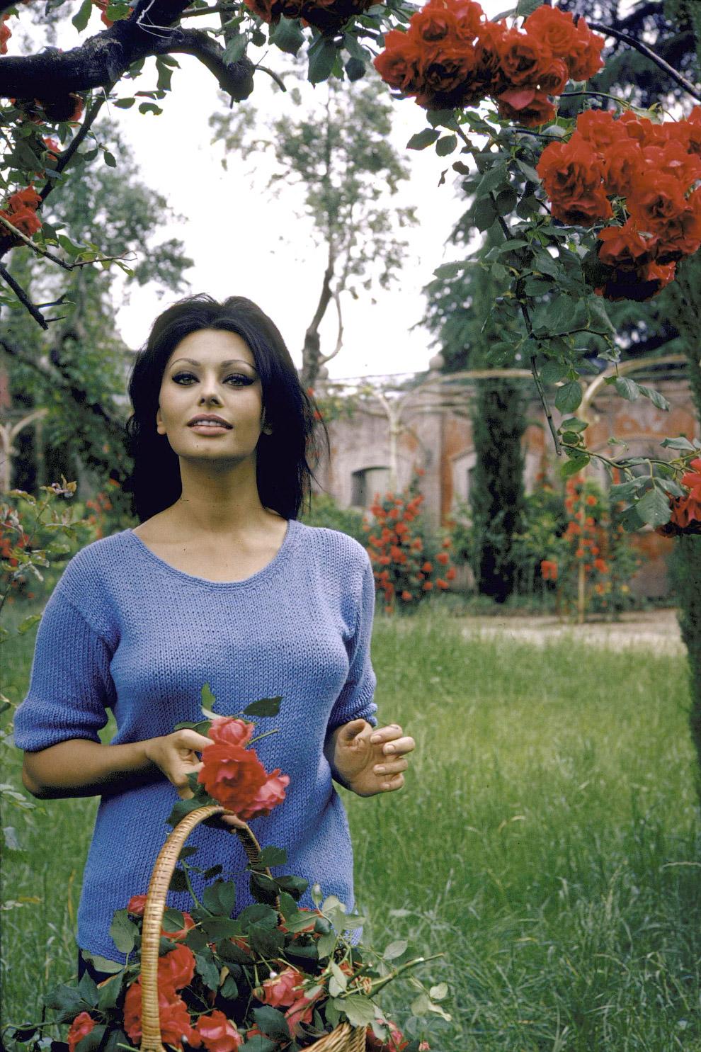 Софи лорен цветы фото