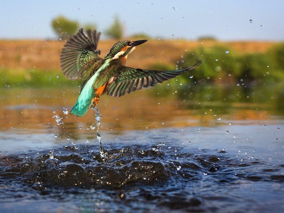 Рыбалка зимородка