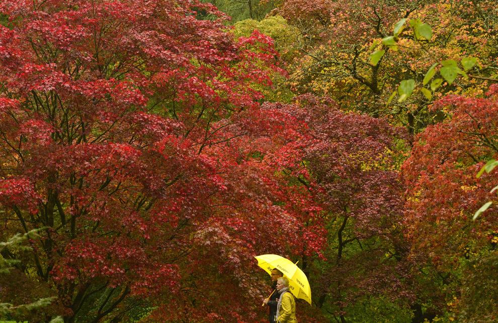 Вся палитра цветов в дендрарии на юго-западе Англии