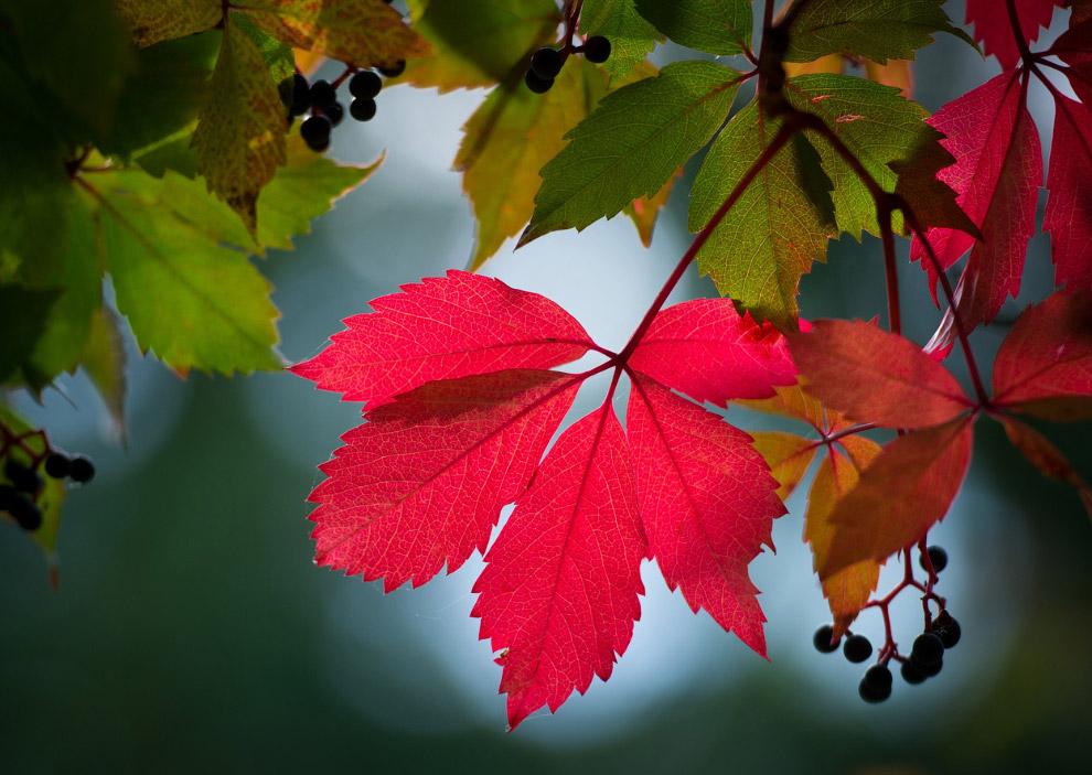 Последний взгляд на осень
