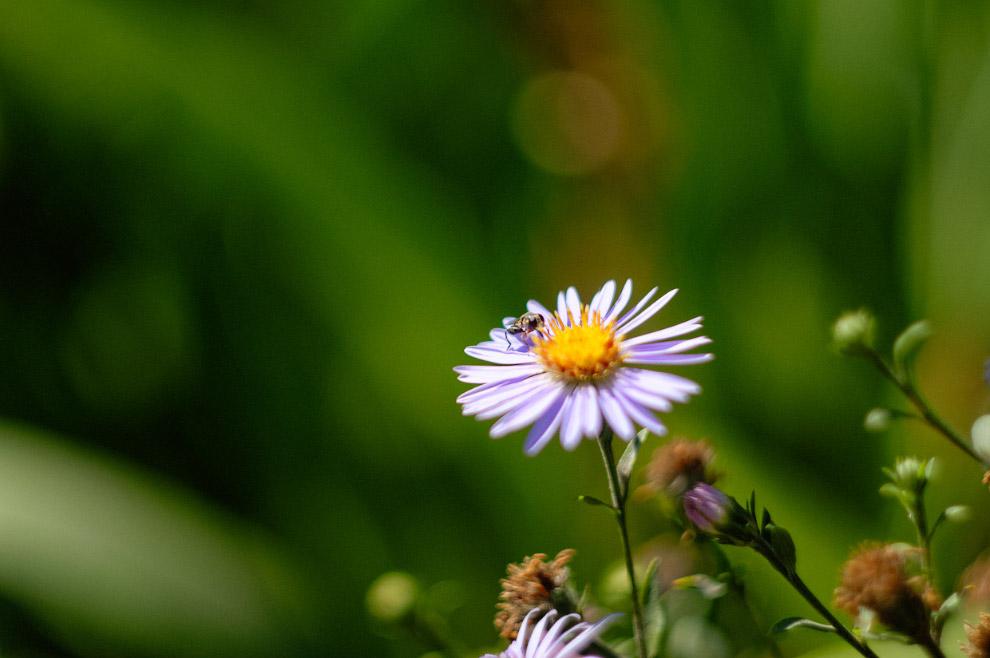 Незаметная пчёлка