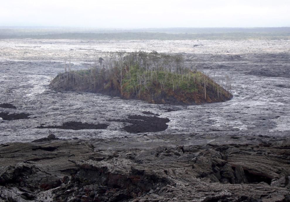 К 18 июля от лесных массивов на вулканическом конусе мало что осталось