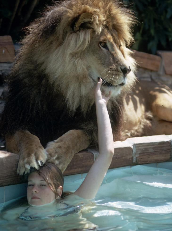 Мелани Гриффит в бассейне со львом