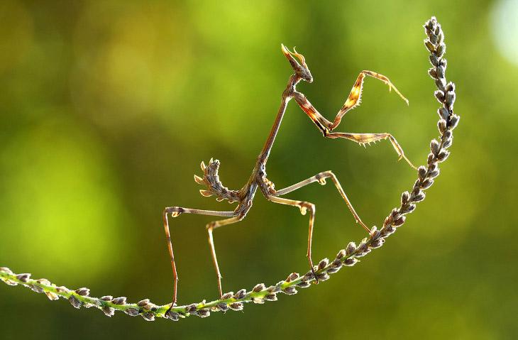 Лучшее с конкурса фотографии National Geographic 2014