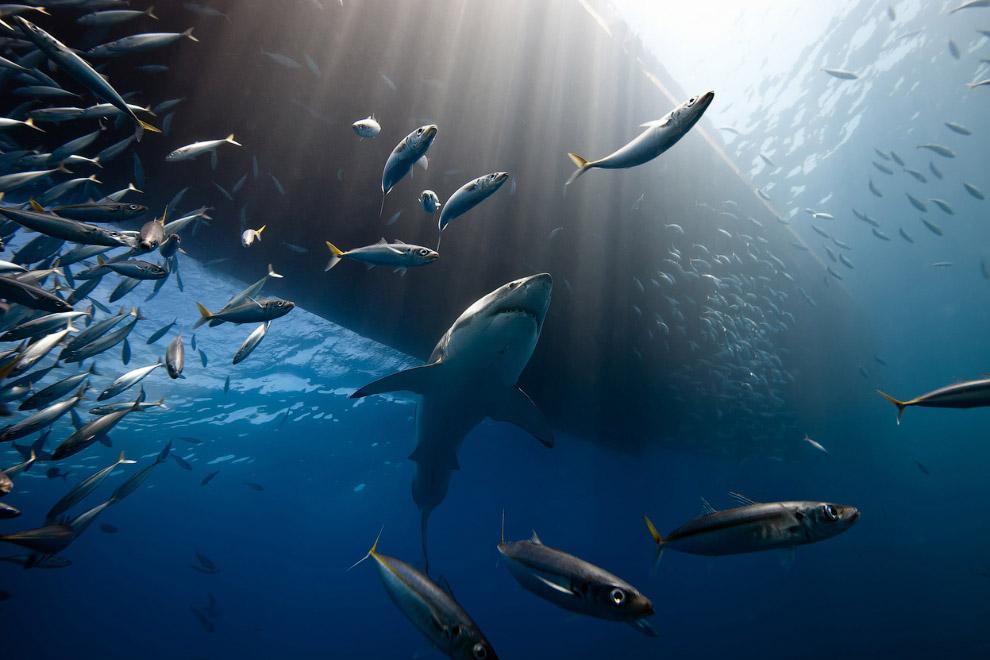 Акулы у побережья Мексики