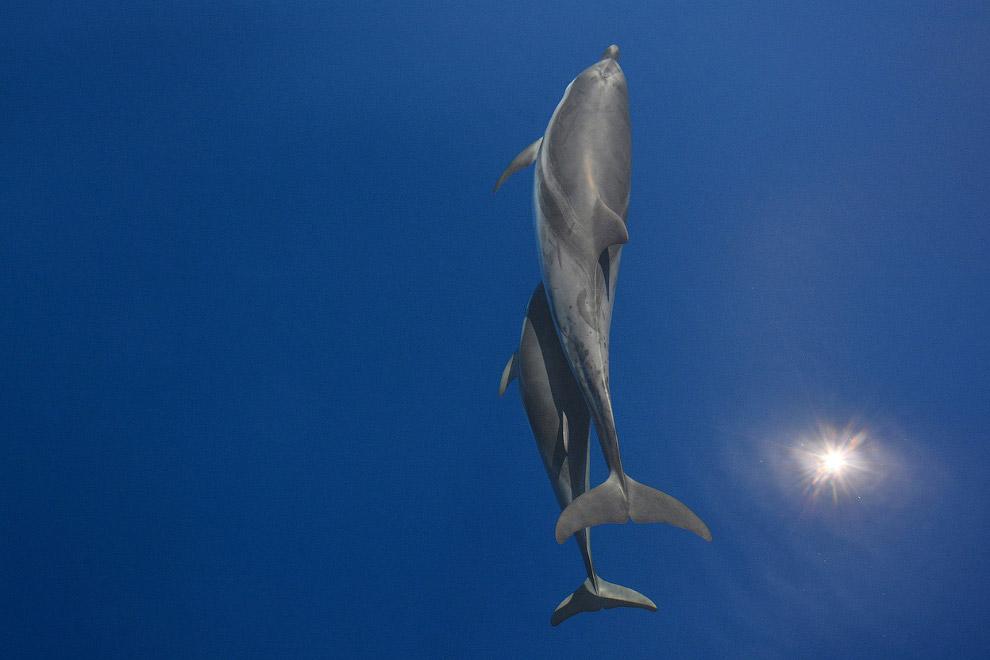 Танец дельфинов на юго-западе Эгейского моря