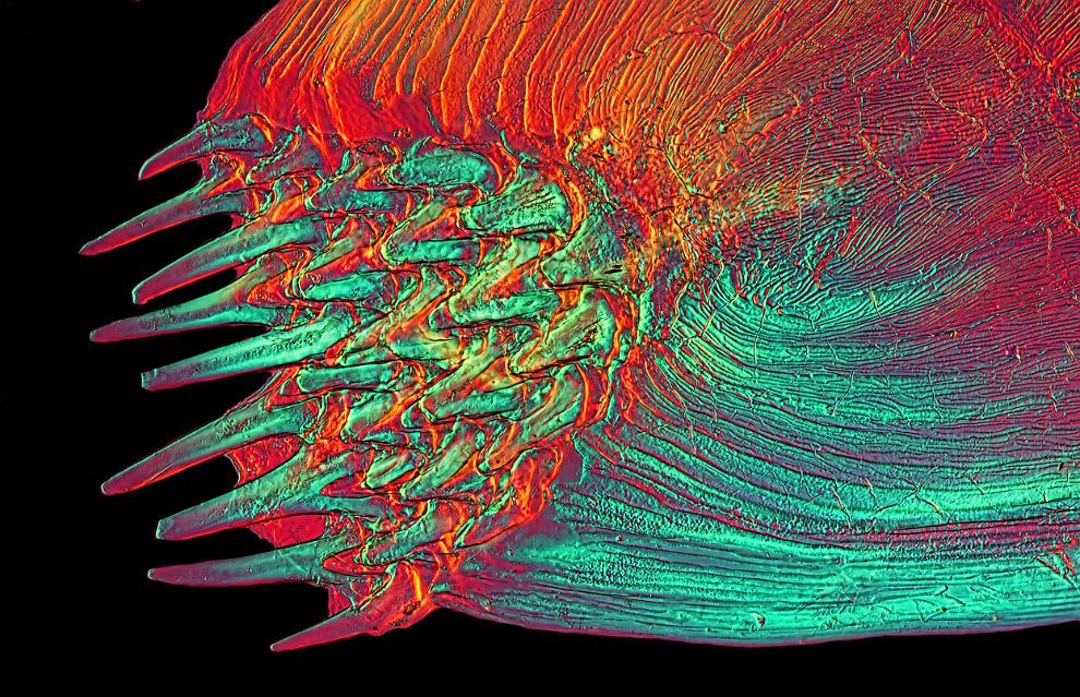 Рыбка в поляризованном свете