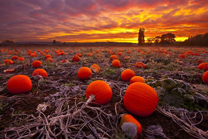 Осенние пейзажи 2014