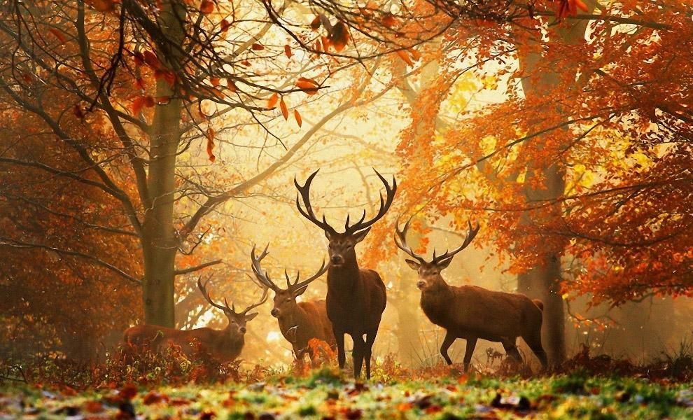 Царство оленей
