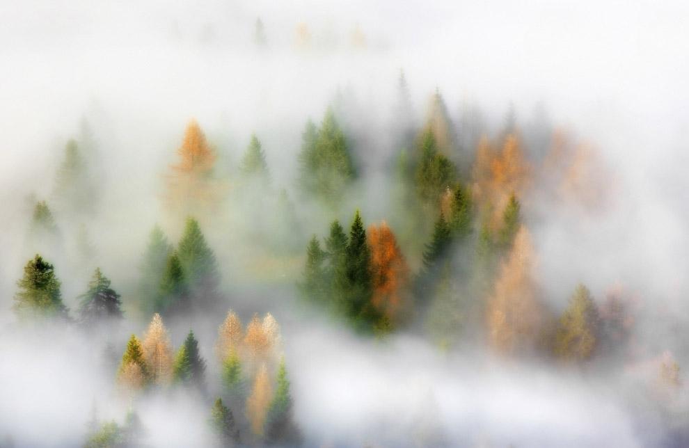Осенние мечты