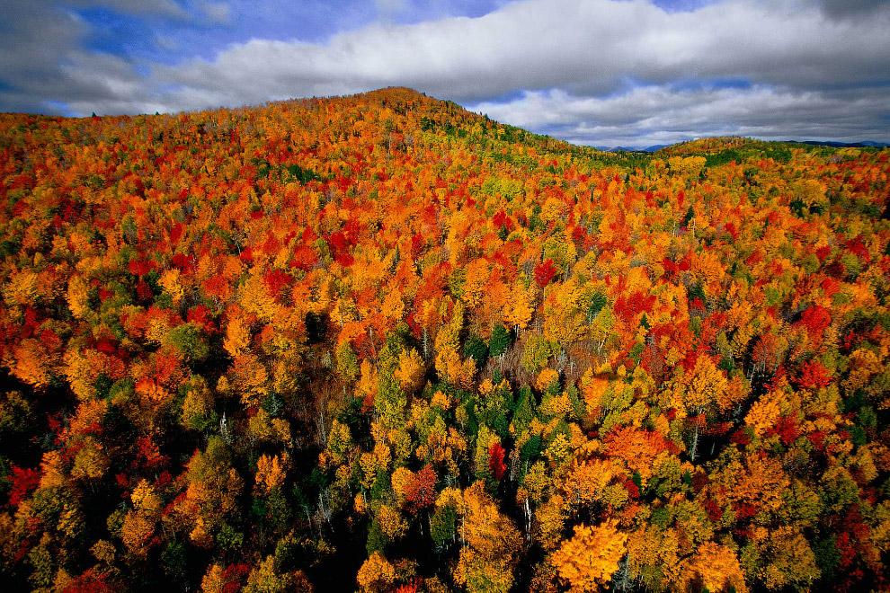 Осенний лес в Канаде