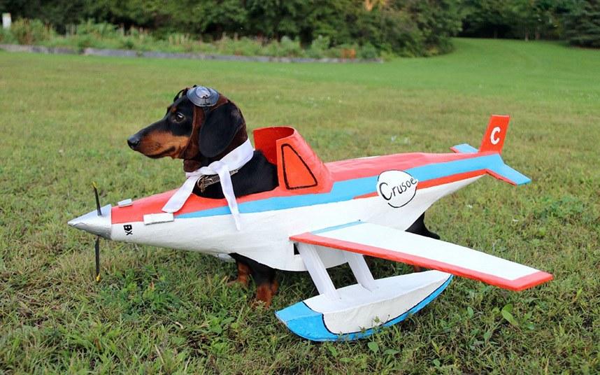 Такса-летчик