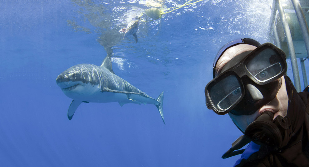 Автопортрет на фоне большой белой акулы у берегов Гваделупы, Мексики