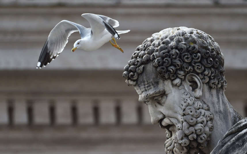 Чайка над статуей Святого Петра на площади Святого Петра в Ватикане